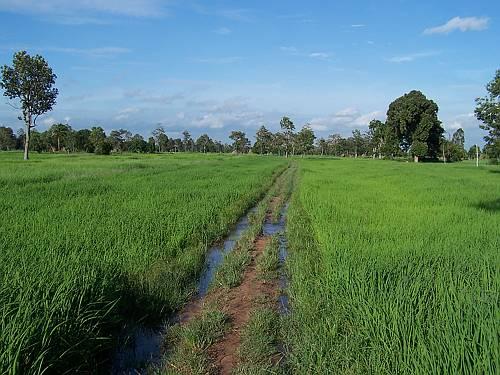 thaise rijst